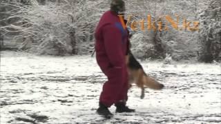 Защитно-караульная служба (ЗКС)(Vetkin представляет видео из курса