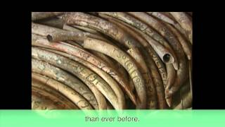 The Risks of Legal Trade in Rhino Horn HD