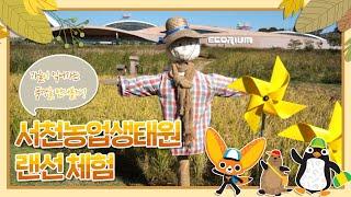 [국립생태원] 가을이 익어가는 풍경, 서천농업생태원 랜…