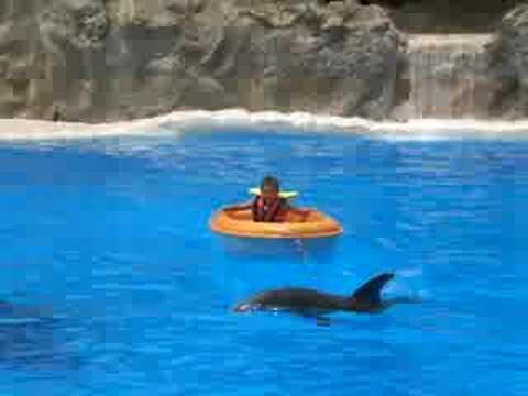 il bimbo e i delfini