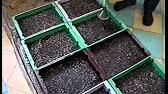 Выращивание рассады. Когда сеять семена. - YouTube