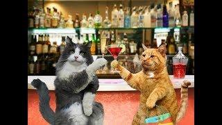 Анекдот от кота Миши про кошек 2