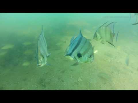 Port Manatee Channel Edge is like an aqaurium! GoPro fishing video!