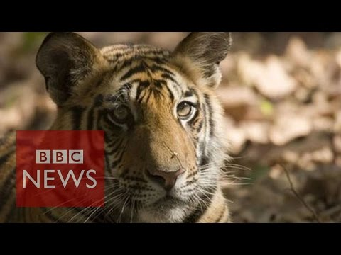 Earth loses 50% of wildlife in 40 years - BBC News
