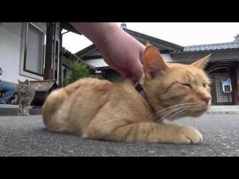 origin of siamese cats