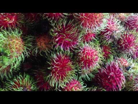 Thai fruits,Thailand ผลไม้ไทยที่โด่งดังไปทั่วโลก ฝรั่งหลงไหล คนชอบชอบมาก เงาะ ทุเรียน มังคุด