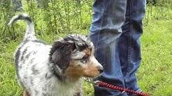 Hundeschule Bayerischer Wald