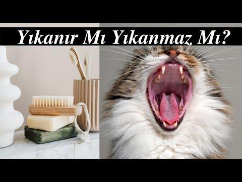 Evcil Kedi Ve Köpekler Yikanir mi?