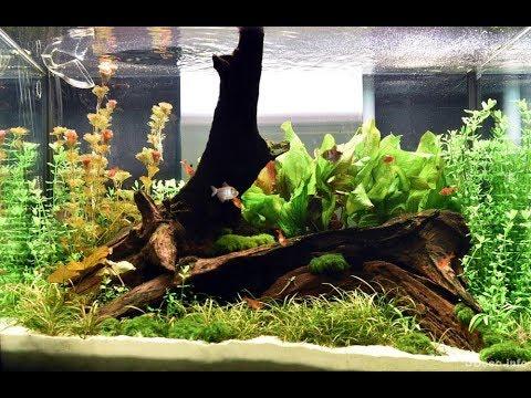 Мангровая коряга в аквариуме Нужна или нет