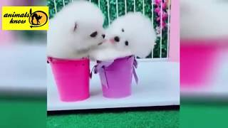 Funny videos pet and animals
