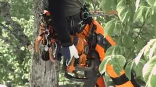 Tough Arborist work demands tough equipment