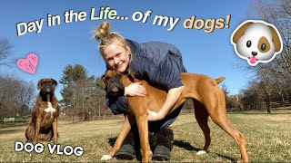 Dog Vlog! | Day In The Life of My Dogs!
