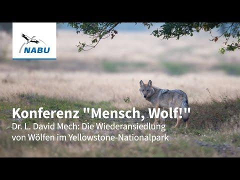 Vortrag Dr. L. David Mech - Wiederansiedlung von Wölfen im Yellowstone
