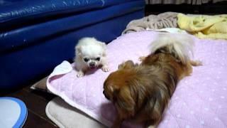 青汁さん、家庭生活には慣れてきましたが 生活を共にする保護犬こそきち...