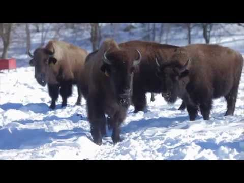 Fossil Farms Game & All Natural Meats Company Video HD