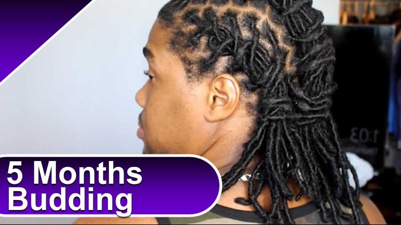 Locs lost budding products and more 5 month permanent dread locs lost budding products and more 5 month permanent dread extensions update pmusecretfo Choice Image