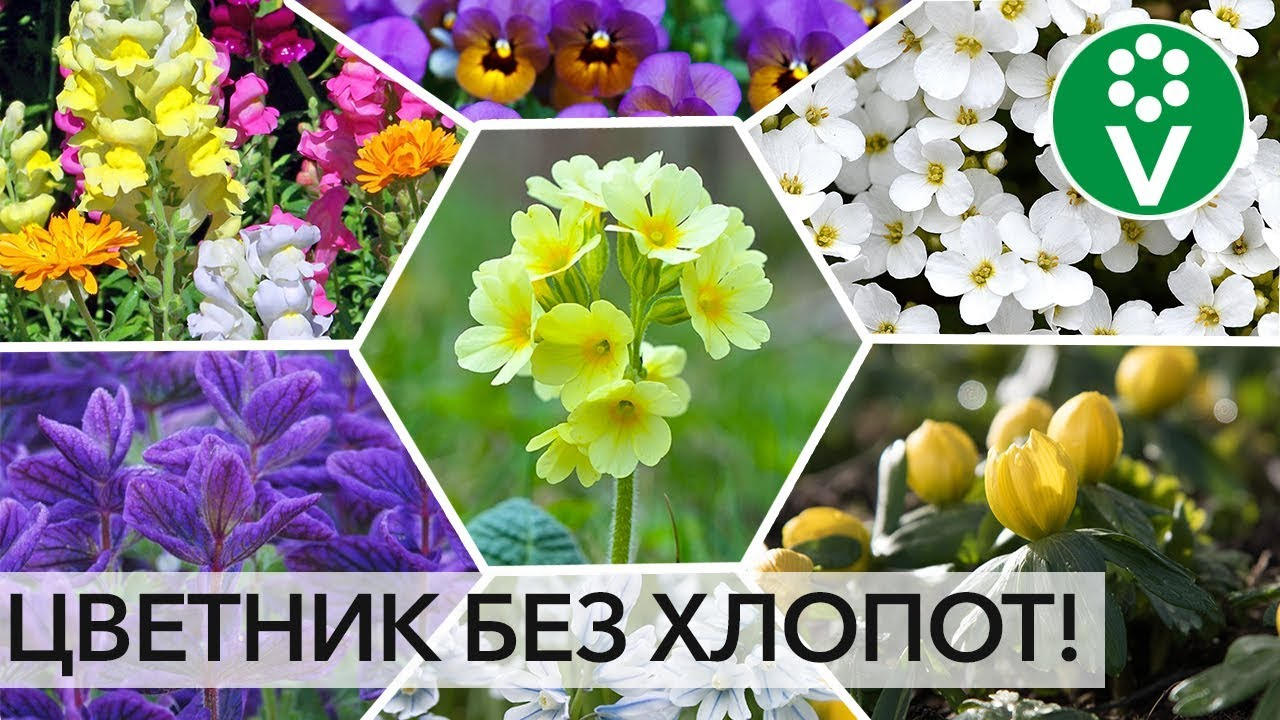 ПОСЕЙТЕ РАЗ И НА ВСЮ ЖИЗНЬ! Лучшие цветы, которые размножаются сами!