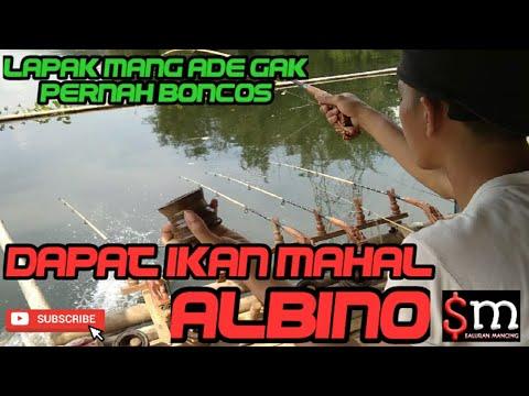 Mancing Jatiluhur Lapak Mang Ade Spot Pagadungan - Madang ...