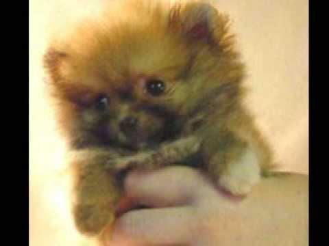 Cute Little Puppy Dogs Youtube