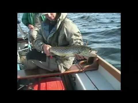 Ferrox Trout From Lough Corrib, IRELAND.