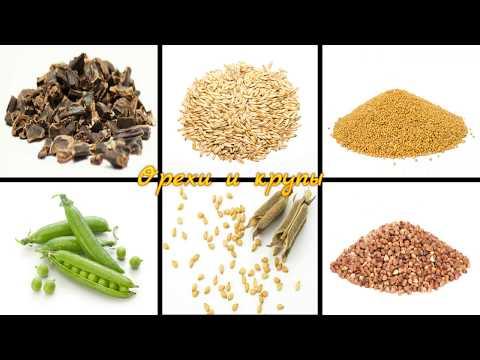 ПИТАНИЕ хомяков | Основные, разрешенные хомякам, орехи и крупы | Что можно