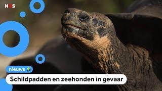 Gezonken boot lekt olie bij bedreigde dieren