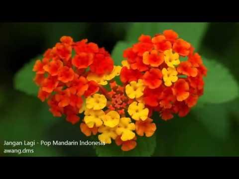 Jangan lagi - Pop Mandarin Indonesia