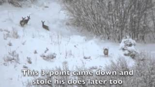 2012 Utah Extended Archery Deer Hunt