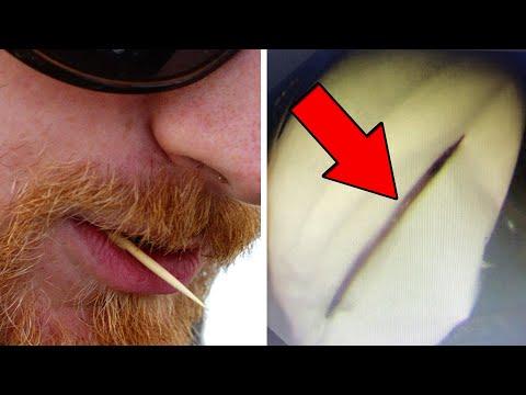 Video gajah seret tubuh yang tertabrak kereta; tusuk gigi ditemukan di perut pria  -  TomoNews