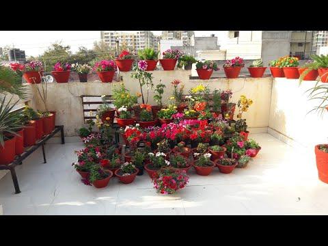 Spring Garden Overview || 100K Subscribers Celebration || Fun Gardening