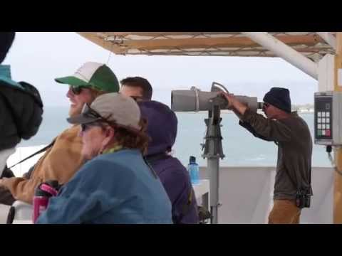 Sanctuary at Sea: A Your Sanctuary TV Special Presentation