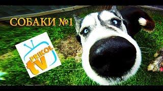 Подборка приколов про собак №1