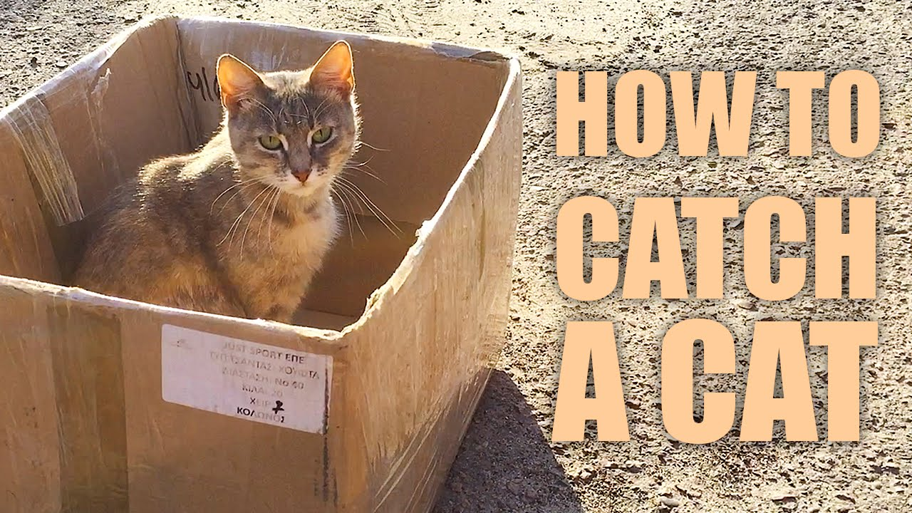 30  Beautiful How to Catch A Cat