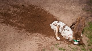 Если собака роет землю  Воспитание без насилия. Метод Пола Оуэнса.