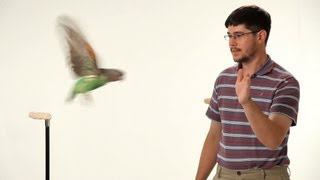 How to Teach Your Parrot to Fly | Parrot Training