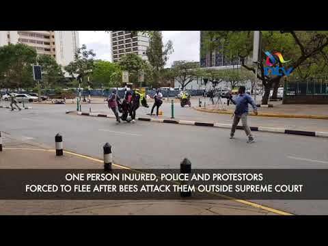 One person injured, police, protestors forced to flee after bees attack them outside Supreme Court