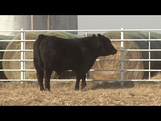 Express Ranches Lot 306