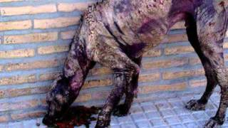 Video Feder F.I.D.A. onlus for to stop the holocaust of the europe animal's
