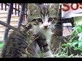 母猫と子猫が仲良くじゃれて遊んでる それを父猫が見守る 幸せな時間の動画