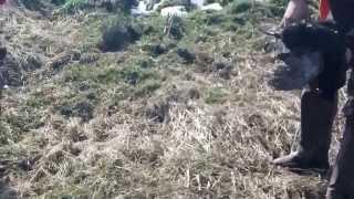 普段のシーズンよりも少ない雪の1月下旬。河川敷での雉猟。この日は多く...