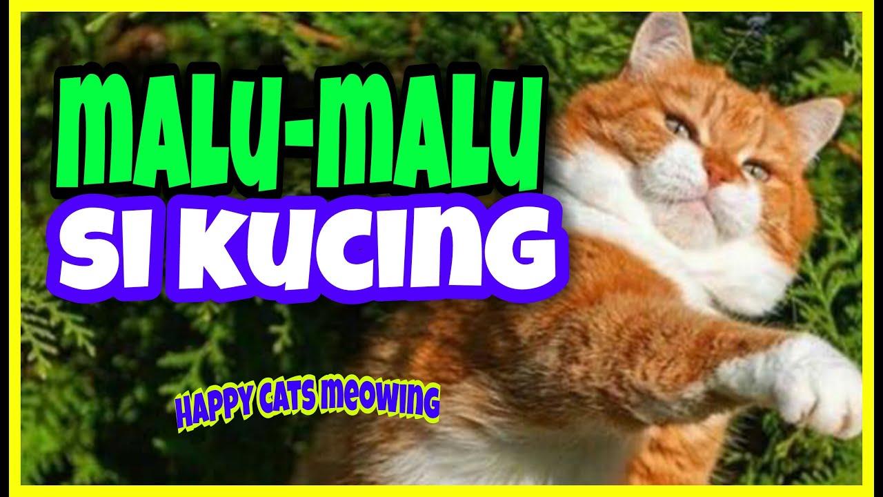 My Cute Siamese Cats 2020 Youtube