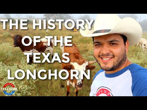 Texas Longhorn History: The Journey Of America's Oldest Cattle And How They Helped Shape Texas