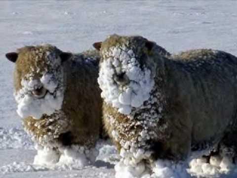 Les animaux dans la neige youtube - Animaux de blanche neige ...