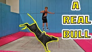 TRAMPOLINE VS BULL (ft. The Dudesons)