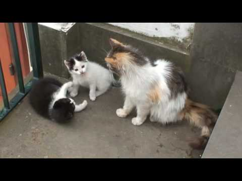 ADORABLE KITTENS AND THEIR MOTHER