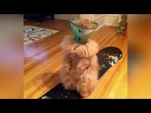 SO FUNNY you will LAUGH ALL DAY LONG! – Super HILARIOUS ANIMAL videos