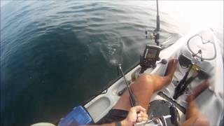 Kayaker gets a surprise visit from a shark