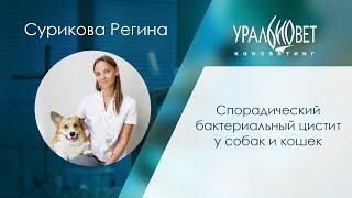 Спорадический бактериальный цистит у собак и кошек. Сурикова Регина #убвк_нефрология #убвк_урология