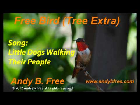Andy B. Free - Little Dogs Walking Their People - Soft Rock/Pop Song