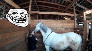 Как мы проводим время на конюшне :)))))